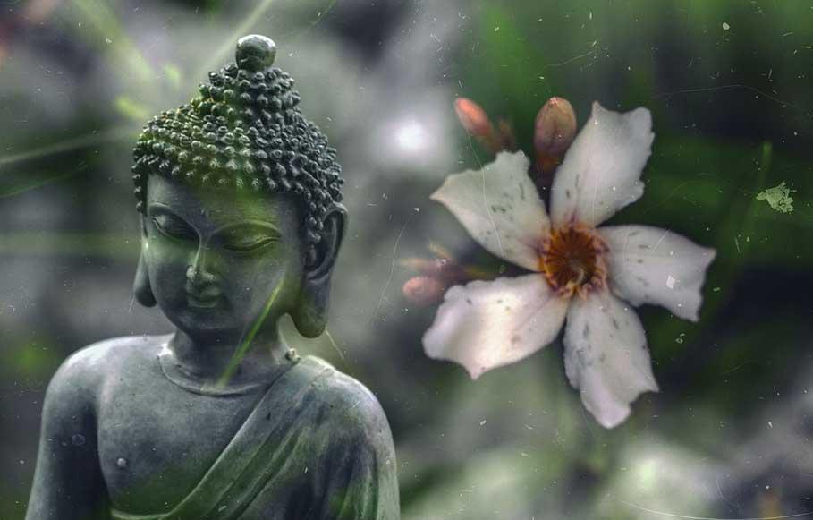 Buddha und Blüte